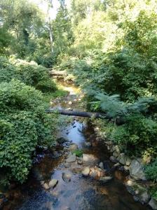 a stream!